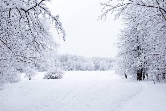 Winter trees in Russia