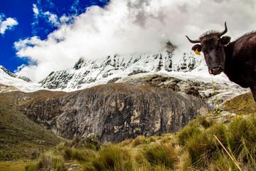 La bellissima Cordillera bianca e le sue lagune nel parco nazionale Huascaran, Huaràz, Perù