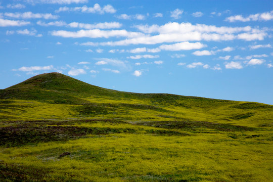 Rolling Green Hills at Custer State Park in South Dakota