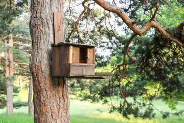 A wooden birdhouse on a tree. Spring in Kislovodsk park.