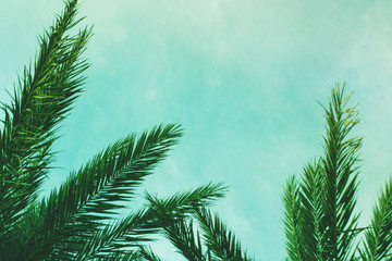 Tropical Palm Tree Leaves Border Background, Horizontal