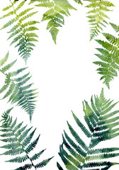 Background with fern leaves