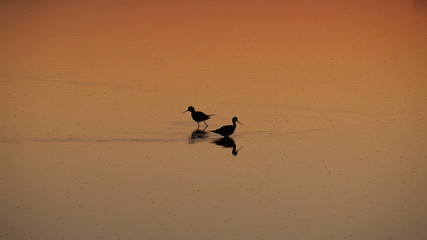 Colonia de Sant Jordi, Mallorca, Spain. Amazing landscape of the beautiful salt flats during the sunset. Silhouette of seagulls in backlight