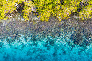Aerial View of Coral Reef and Edge of Forest in Raja Ampat