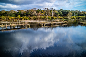 A scenic and peaceful view of the park at Avery Island, Louisiana