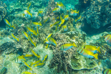 Under water nature of sea life coral reef with fish