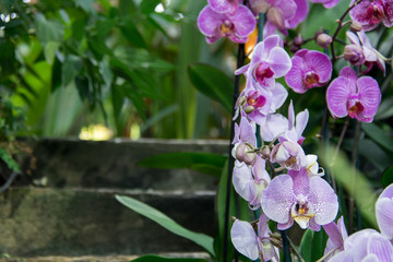 The blossoming orchids in a botanical garden