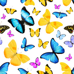 pattern with natural colorful butterflies
