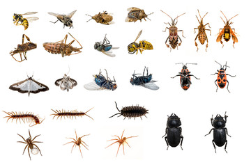 mixed collection of dead and living insects
