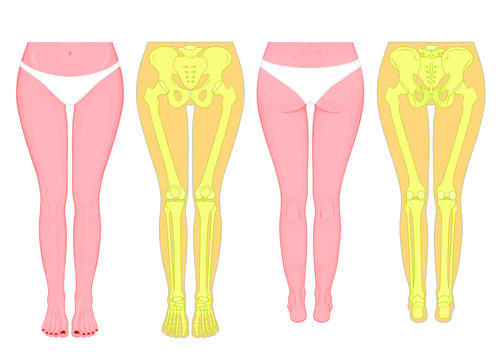 Posterior, frontal, anterior, back views, sides of a European female legs, hips, knees and ankles with underpants. Vector illustration for advertising, medical (health care) publications
