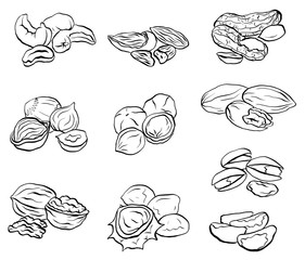 Set of contour drawings of various types of nuts. Objects separate from the background. Vector element for menus, recipes and your design.