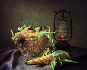 Still life with corn on the cob