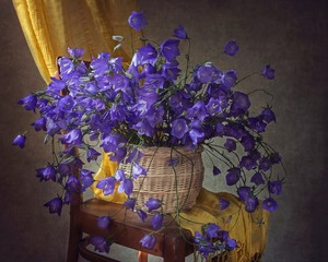 Still life with bouquet  of  forest blue bell flowers