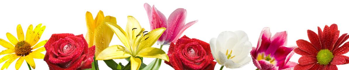 beautiful flowers in the garden closeup