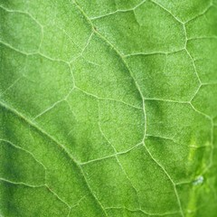 the beautiful green plant leaves in the garden