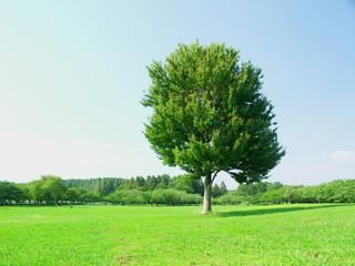 夏の草原と立ち木