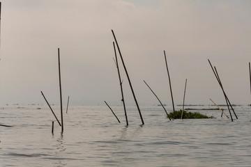 Ramas de cañas flotando en el Lago Inle; Myanmar