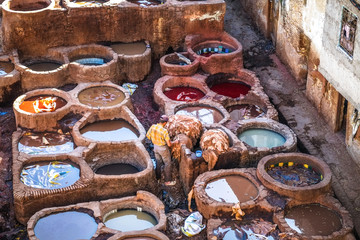 A Moroccan man working with animal hides in the leather tannery. Medina of Fez, Morocco.