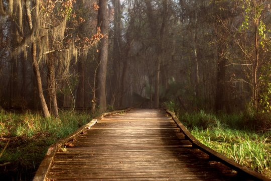 Admiring morning sun rays highlighting a boardwalk in a foggy Louisiana swamp land.