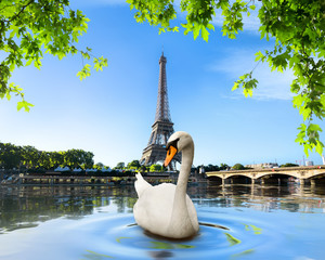 Wall Mural - Swan and Eiffel Tower