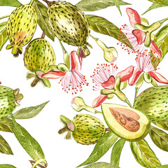 Watercolor illustration feijoa plant. Hand drawn watercolor painting on white background. Watercolor seamless pattern background with feijoa fruit.