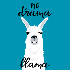 No drama llama hand drawn lettering. Adorable alpaca shows teeth. Portrait of smiling guanaco.