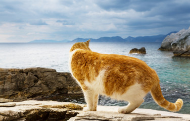 Cat on the sea