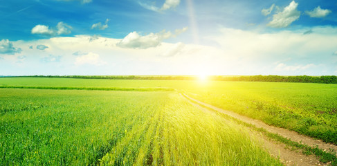Green field and blue sky with light clouds. Above the horizon is a bright sunrise. Wide photo.