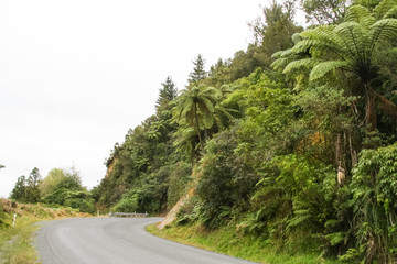 Rain Forest New Zealand. New Zealand landscapes.