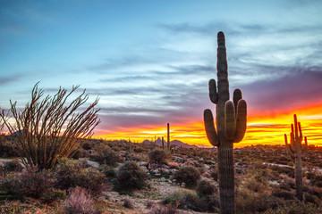 Saguaro cactus with sunset background.