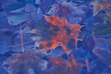 Colorful autumn leaves made with gradient for background. Abstract, texture, soft and blurred style like a postcard. Abstract autumn leaves for blurred background.