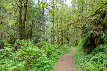 Hiking trail through the rain forest at Golden and Silver Falls State Natural Area, Oregon, USA