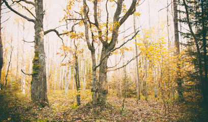 Autumnal mystic forest, toned photo