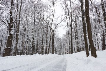 the road in the winter forest and trees in the snow on a cloudy day