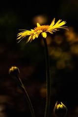 Macro photo of wildlife, flowers and leaves of plants.