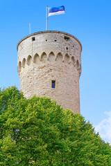 Langer Hermann auf dem Domberg von Tallinn, Estland