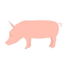 Pig flat isolated on white background