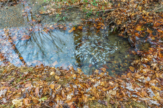 puddle of water in the autumn forest