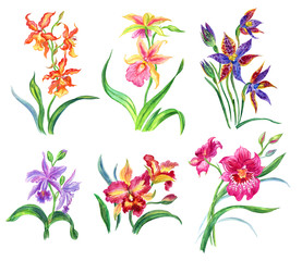Set of orchids, watercolor painting on white background isolated with clipping path.