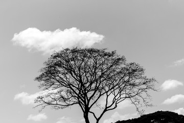beautiful tree and sky in venezuela