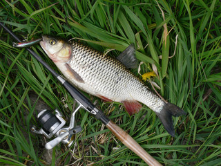 Fish chub, fishing rod, reel, float and net