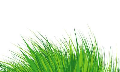 Grass Border , Simple meadow grass, wild lawn. Vector Illustration