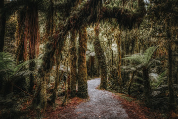 Trail in tropical forest in New Zealand