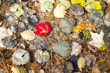 Fall leaves HD for earthy crisp and beautiful background wallpaper.