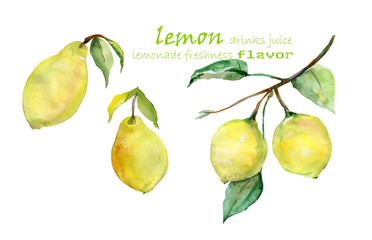 Lemon  pattern on a white background.