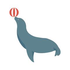 circus   animal   seal