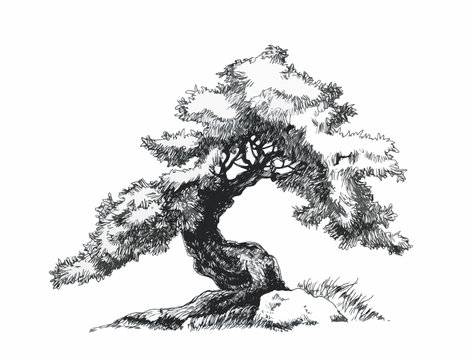 Branched deciduous tree. Bonsai ink drawing.