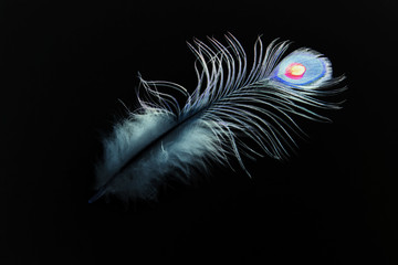 Peacock feather on black background. Abstraction. Illustration of the book.