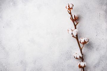 Cotton branch on light background