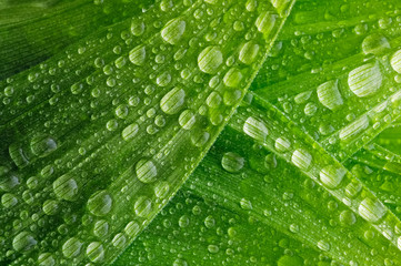 Leaf of a plant in the dew